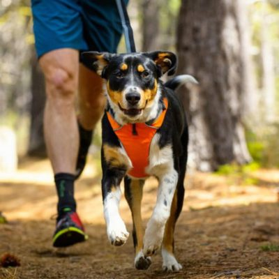 Atlanta's Favorite Hiking Trails to Share with Your Pup