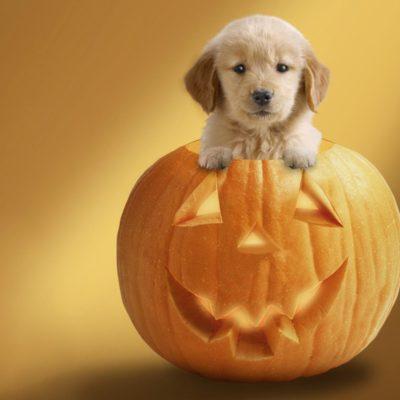 Happy Halloween & Happy Rescuing!